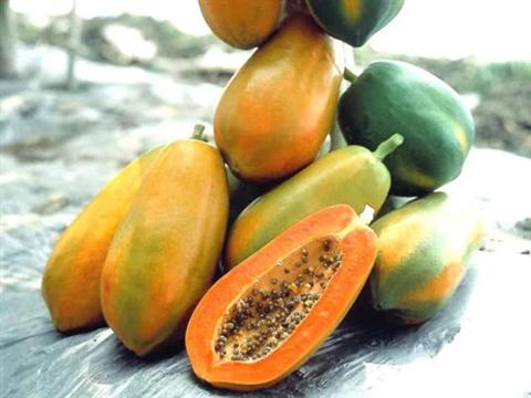 Các loại vitamin làm đẹp da có trong đu đủ